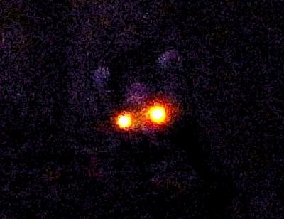 25 狸を目撃!
